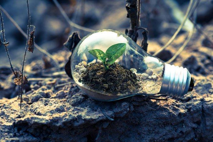 Glödlampa med en planta, menat att symbolisera växthuseffekten och koldioxid
